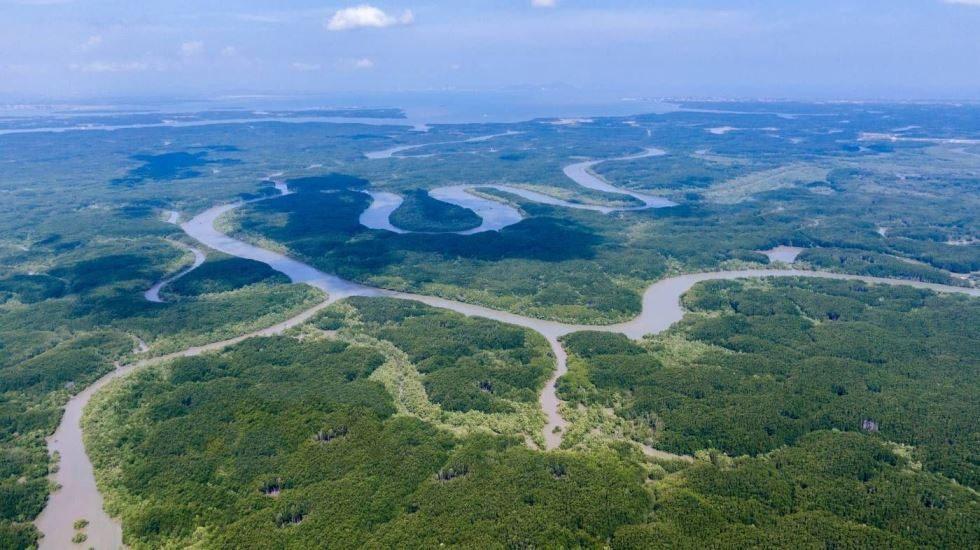 Rừng Sác khu dự trữ sinh quyển thế giới ở Cần Giờ được UNESCO công nhận.